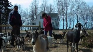 Vermont Goat Meat Gives Refugees Taste of Home