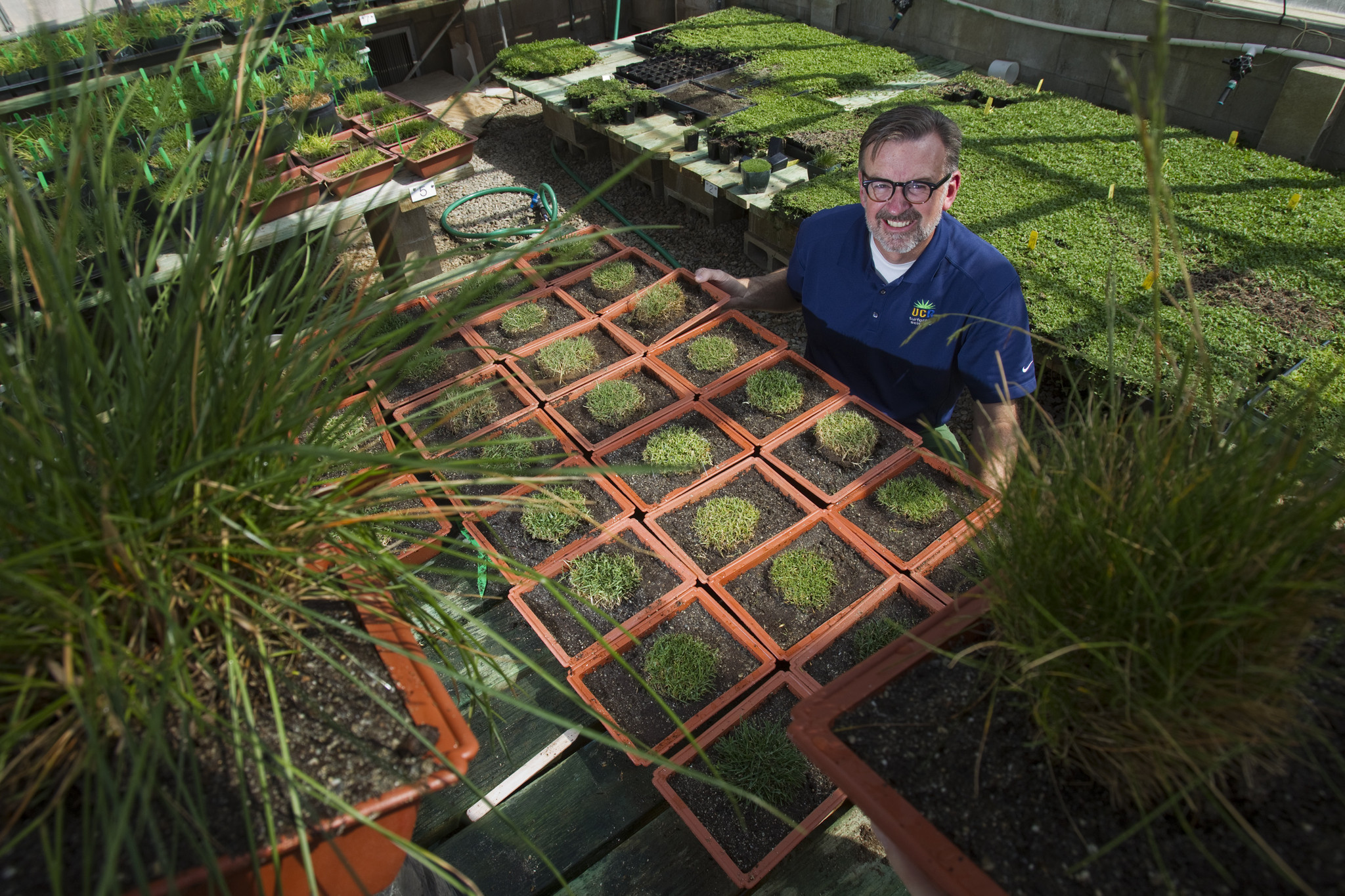 Lawns: Best warm-season grasses for drought conditions - The San ...