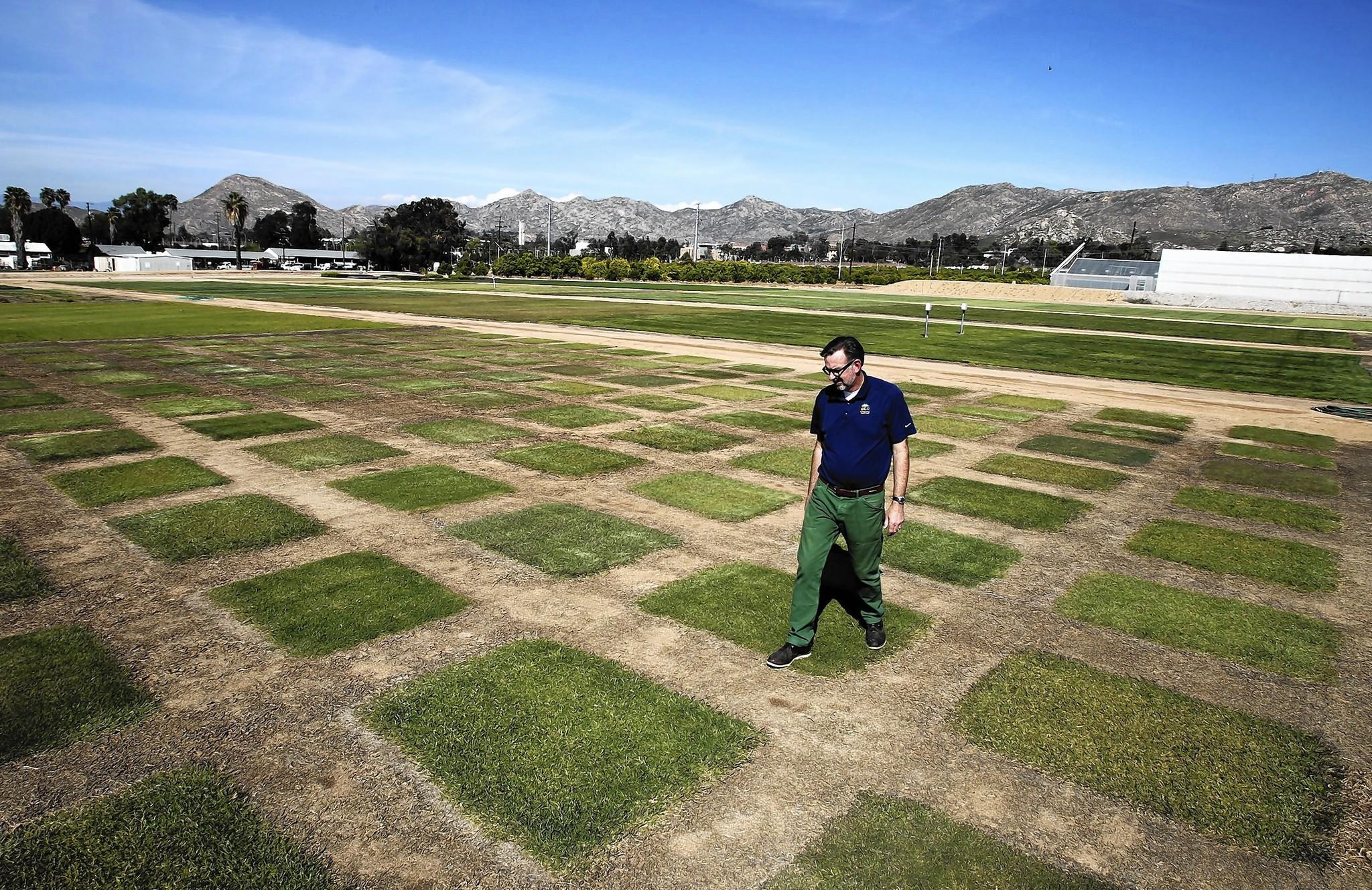 UC Riverside turfgrass specialist and researcher Jim Baird walks through patches of commercial and experimental Bermudagrass that is being evaluated for drought tolerance.