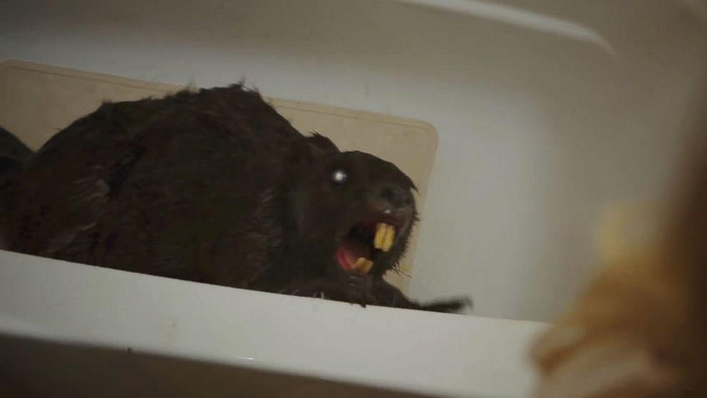"A shot from Jordan Rubin's monster B-movie ""Zombeavers."""