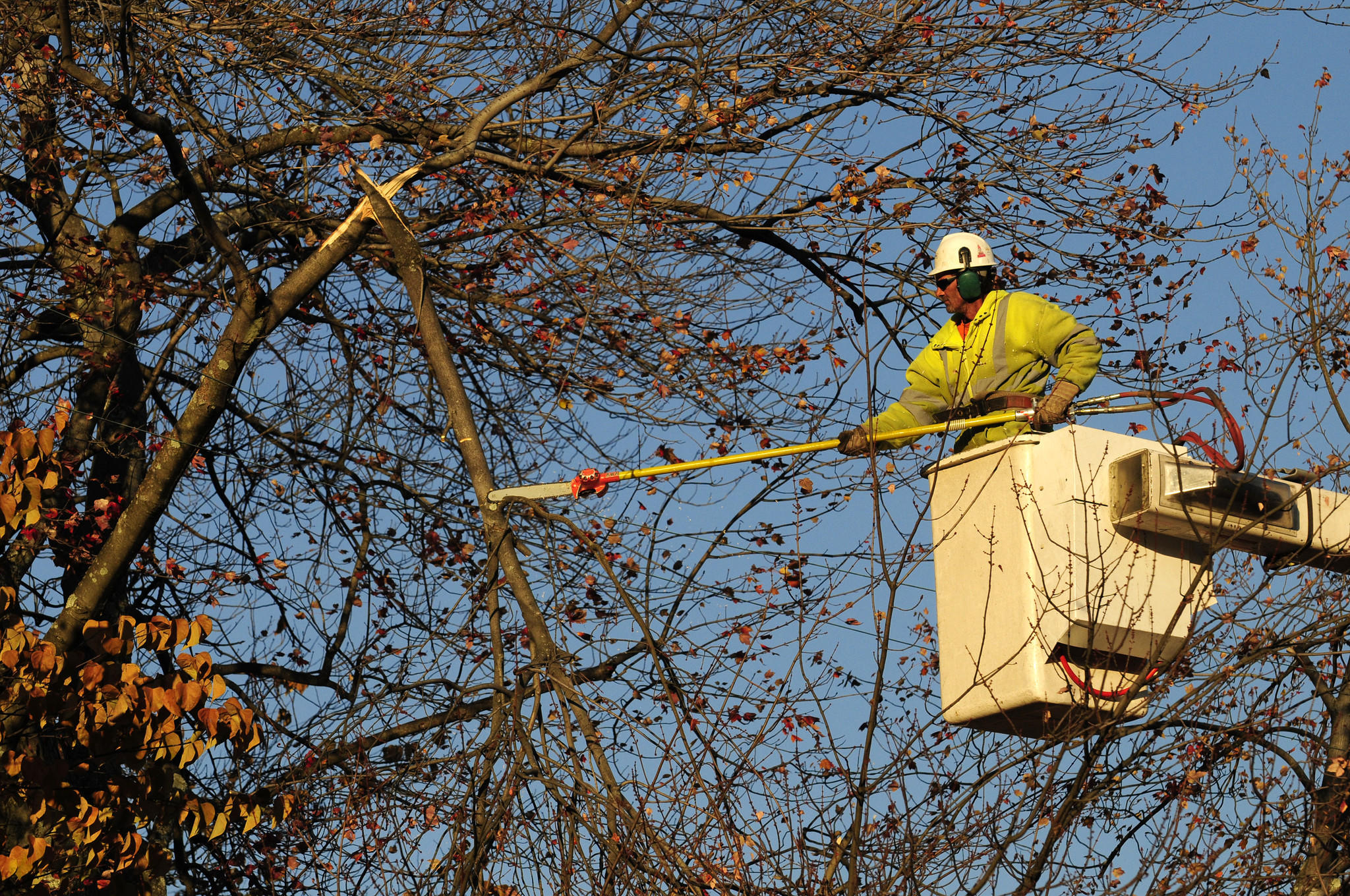A worker from Asplundh Tree Expert Co. trims a large tree hanging over power lines in Manchester following the October 2011 snowstorm.