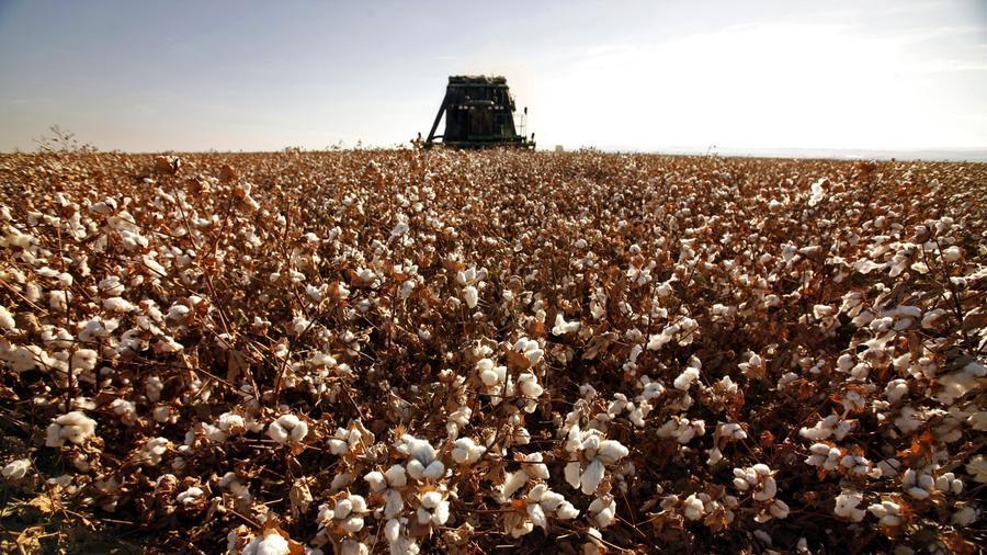 crops global warming