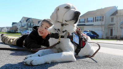 A loyal companion: Service dog helps keep Breinigsville boy safe
