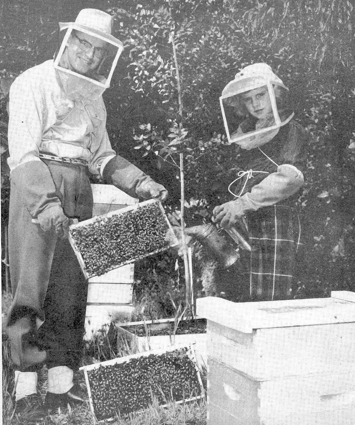 Gene Grabbe and his daughter, Willow, tend to beehives in their Los Amigos Street garden in April 1954. Willow Grabbe, then 9 and a fourth-grade student at La Cañada Elementary School, smokes the bees in the frame held by her father.