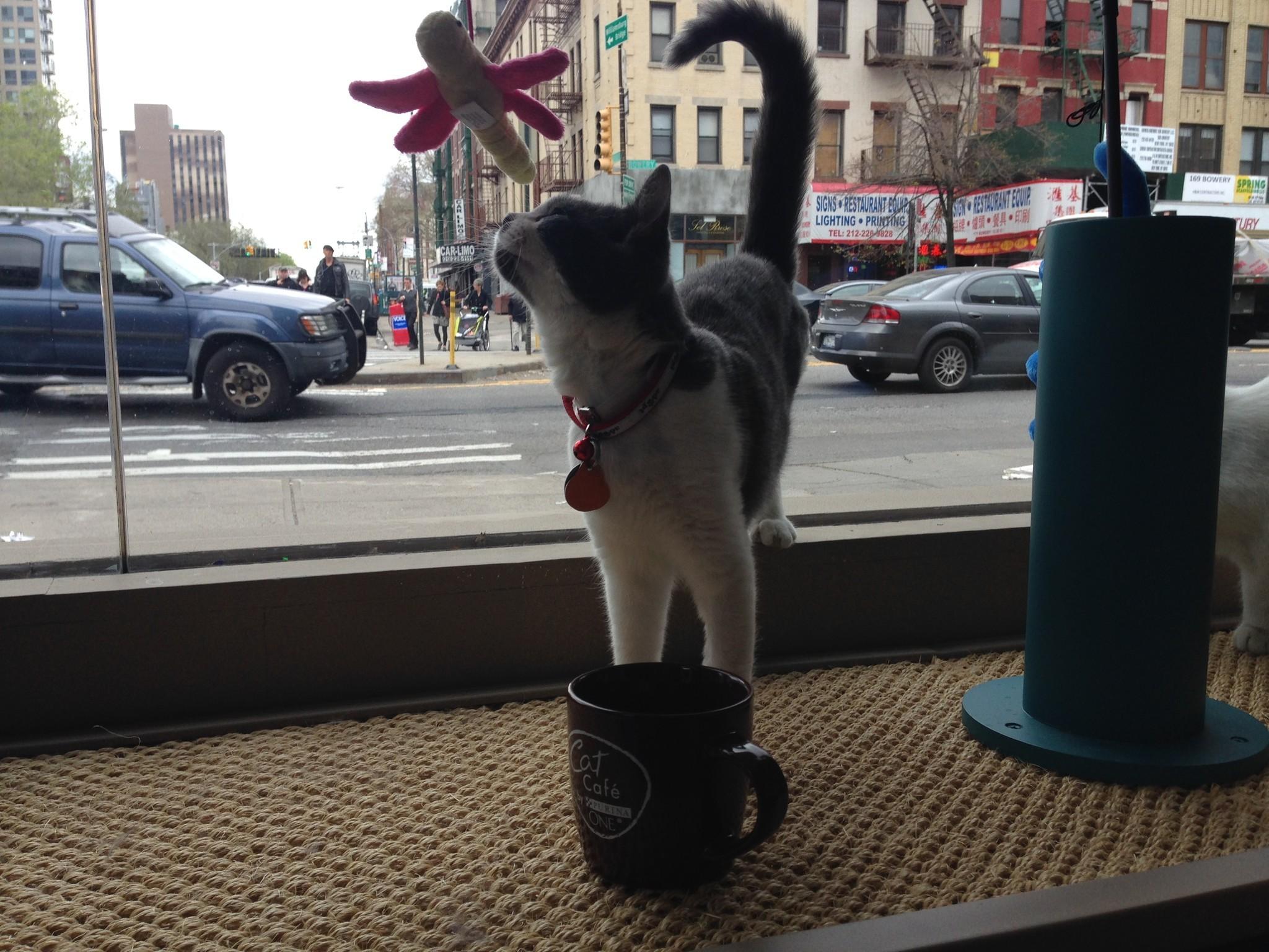 Cat Cafe New York