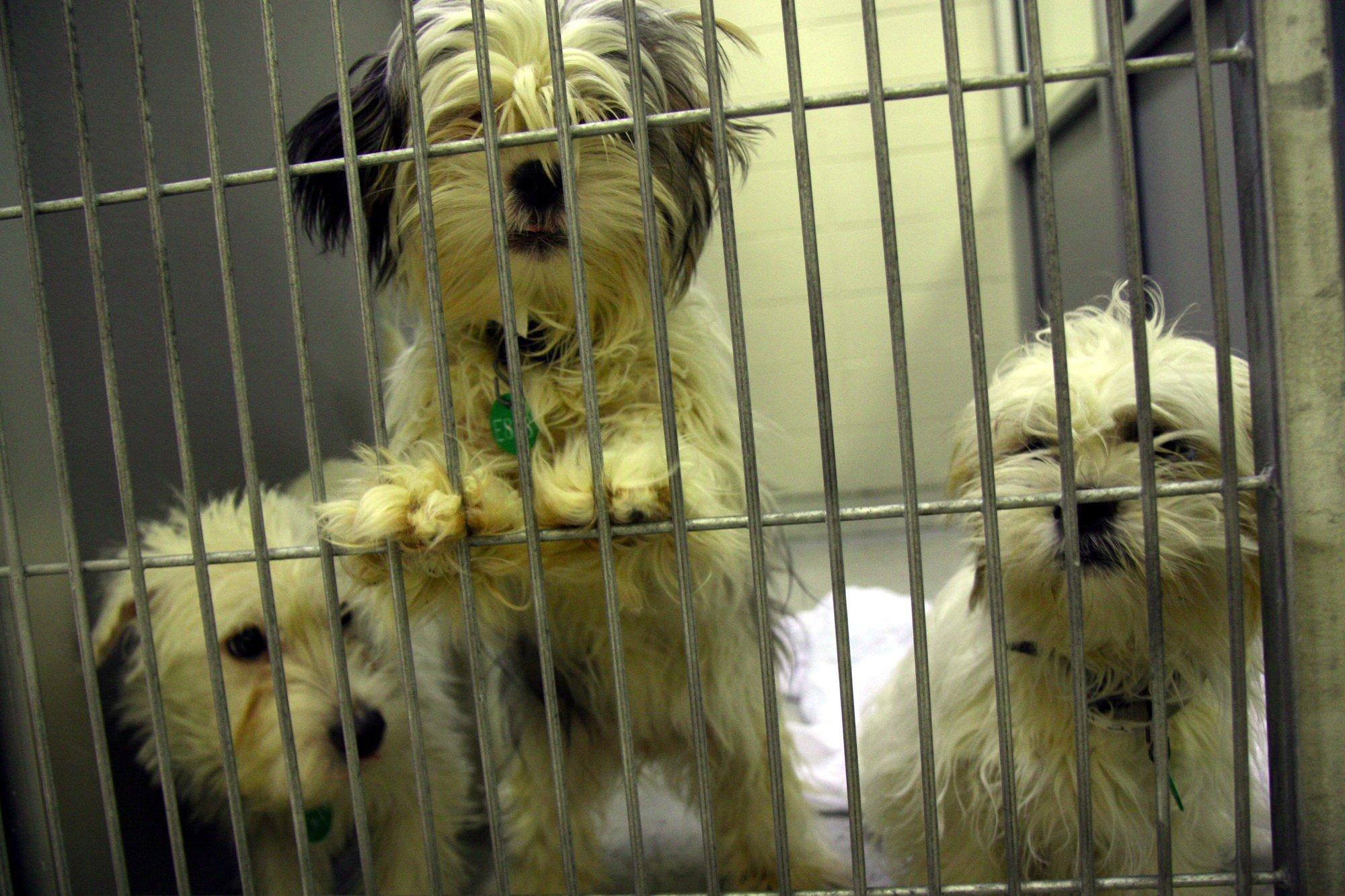 Sunrise has a new law aimed at protecting consumers from buying sick puppy mill dogs.