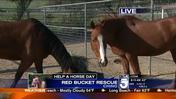 Red Bucket Horse Rescue- At Risk & Unwanted Horses
