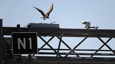 Osprey nest moves to new platform