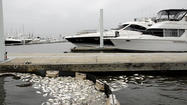 Md. investigates fish kill in harbor