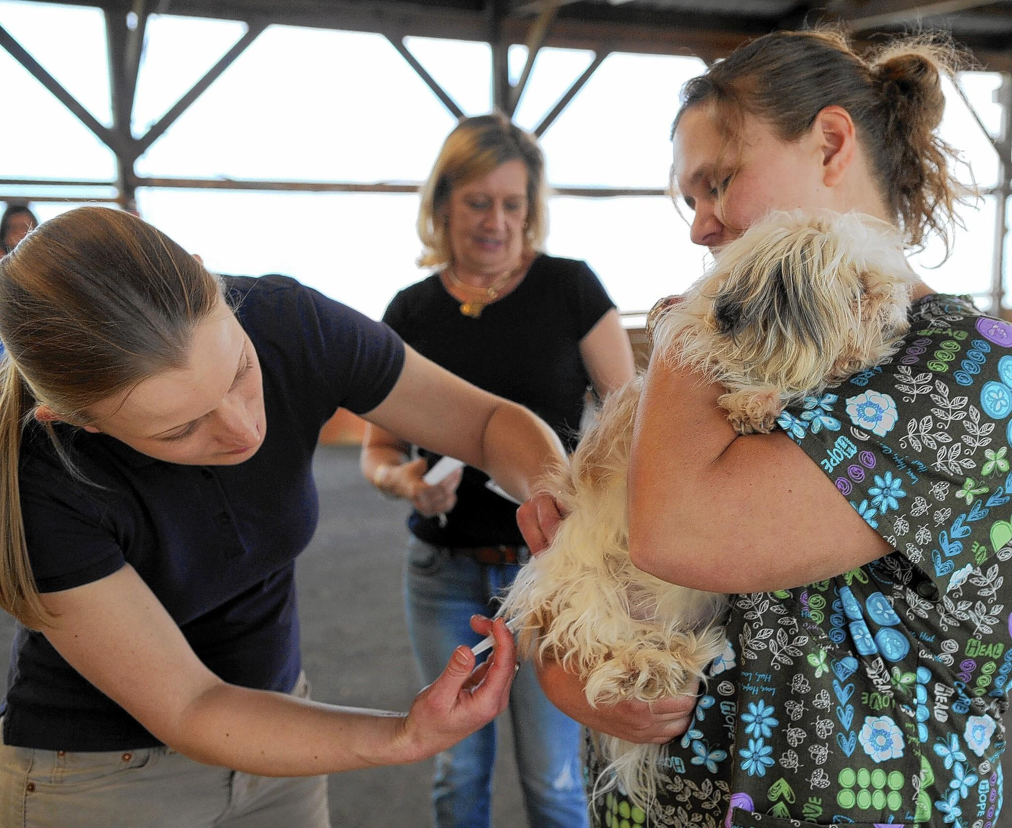 Amy Bodycott, left, and Holly Kopp, from Swan Creek Veterinary Clinic in Havre de Grace work together to give Samantha her shot as owner Maria Kaliush of Fallston looks on during the Rabies Clinic at the Equestrian Center Sunday.
