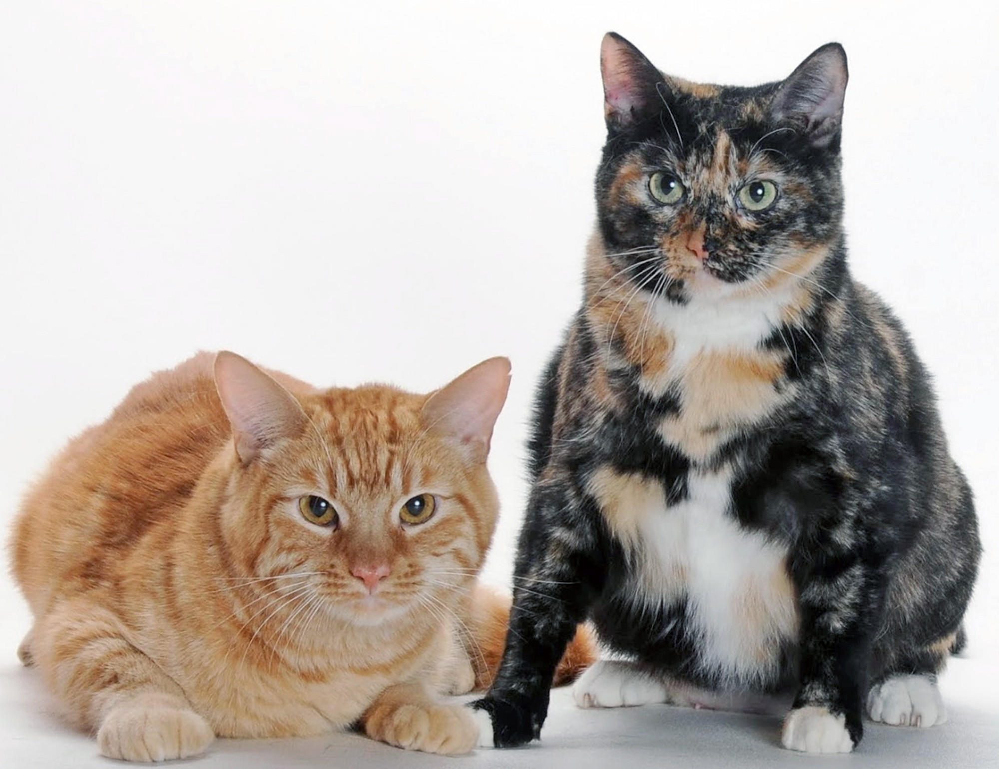 Cas and Oliver are mother and son, up for adoption by the Burbank Animal Shelter.
