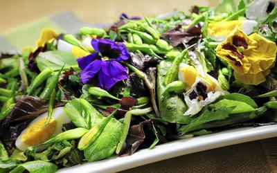 Mixed green salad with hard-boiled eggs and radish pods
