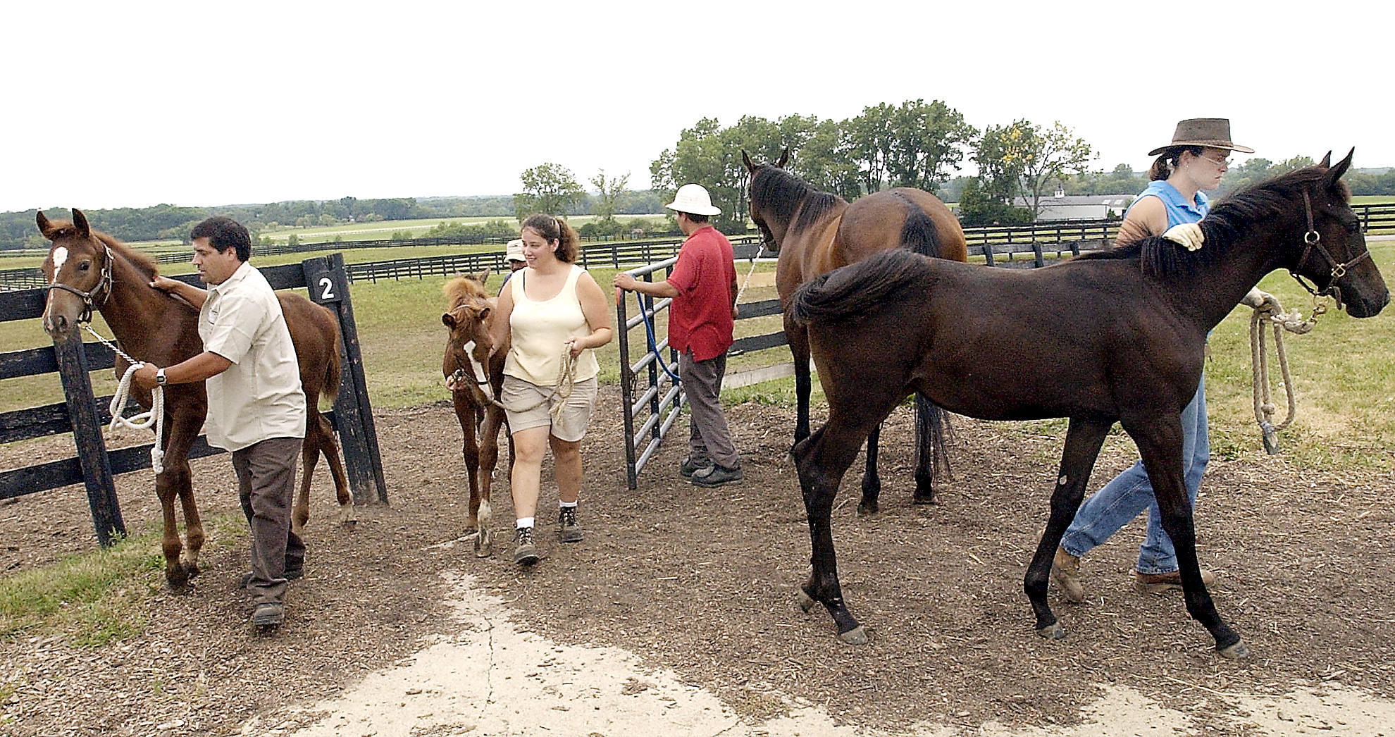 Workers lead the horses in from the fields at Horizon Farms in Barrington Hills, which was discontinuing its boarding operations in 2013.