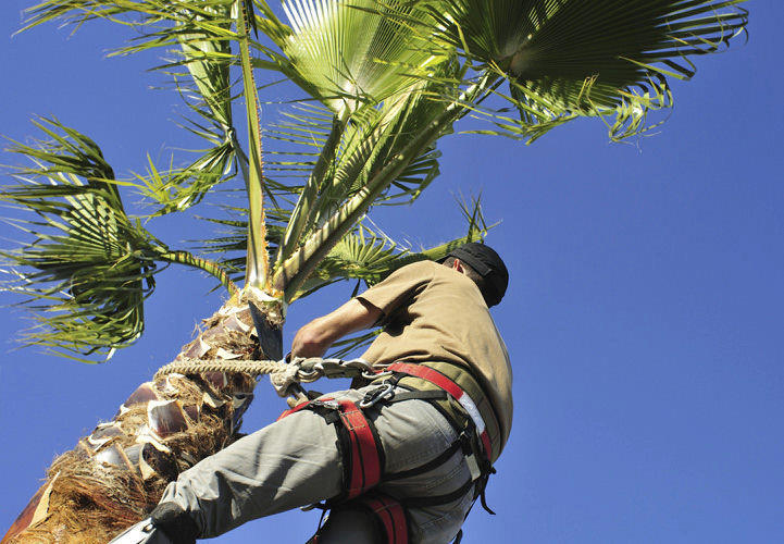 Prepare now for the 2014 hurricane season, which starts June 1, by trimming trees.