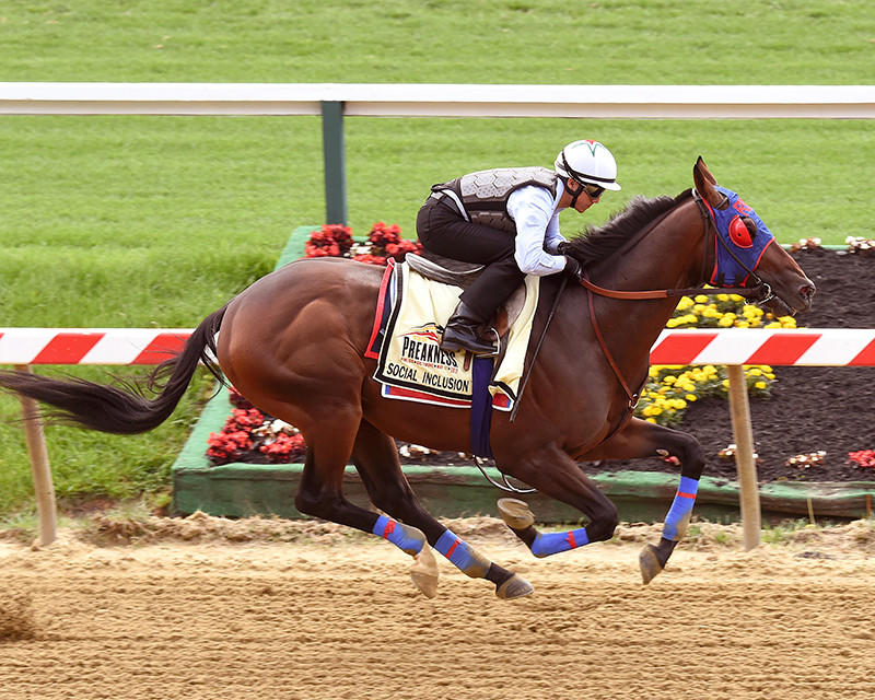 Social Inclusion breezed a half-mile in 47 seconds at Pimlico Race Course on Monday morning.