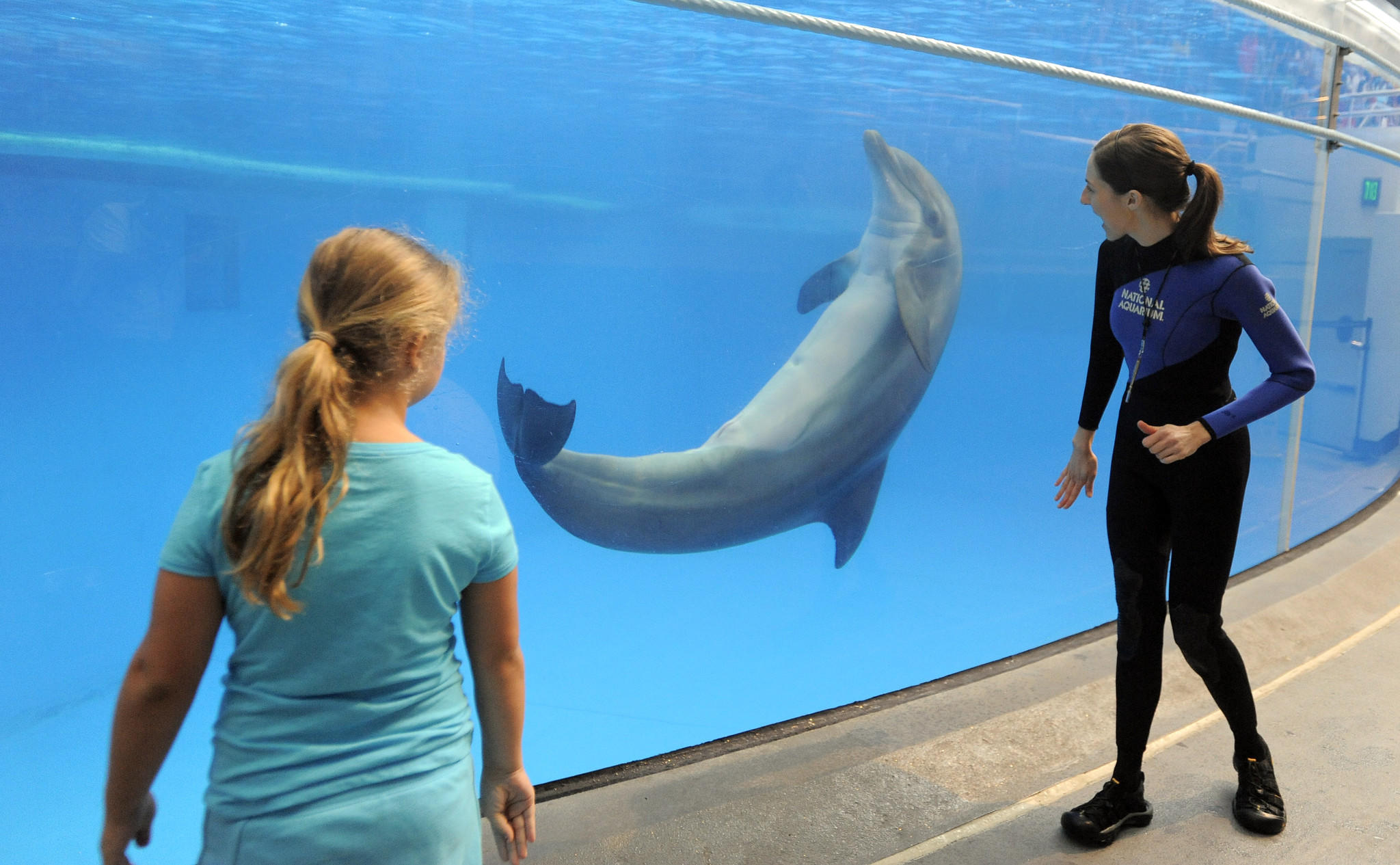 National Aquarium To Consider Whether To Keep Dolphins On