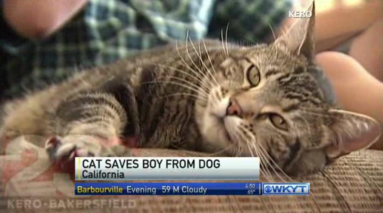 Hero Cat Saves Boy From Dog