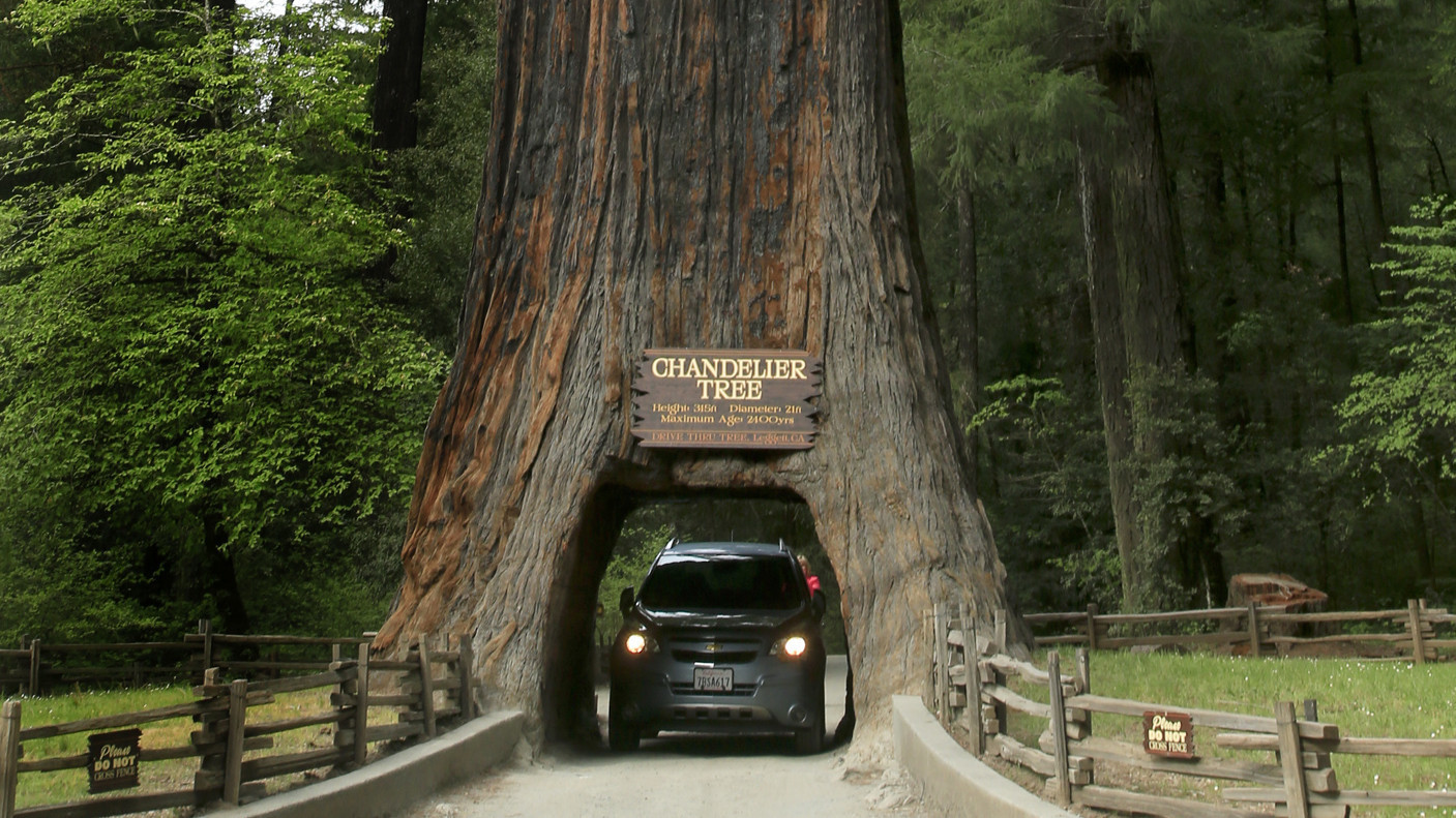 California\'s redwoods: In the land of the giants - LA Times
