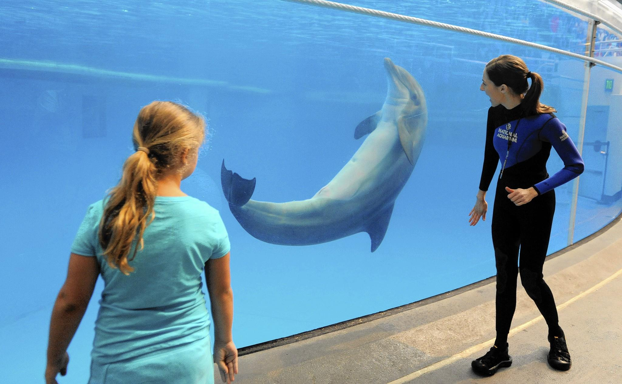 Dolphin trainer Kerry Martens (right) gets some help from Julia Brodowski, 8, of Macumgie, Pa.,down near the dolphin tank.