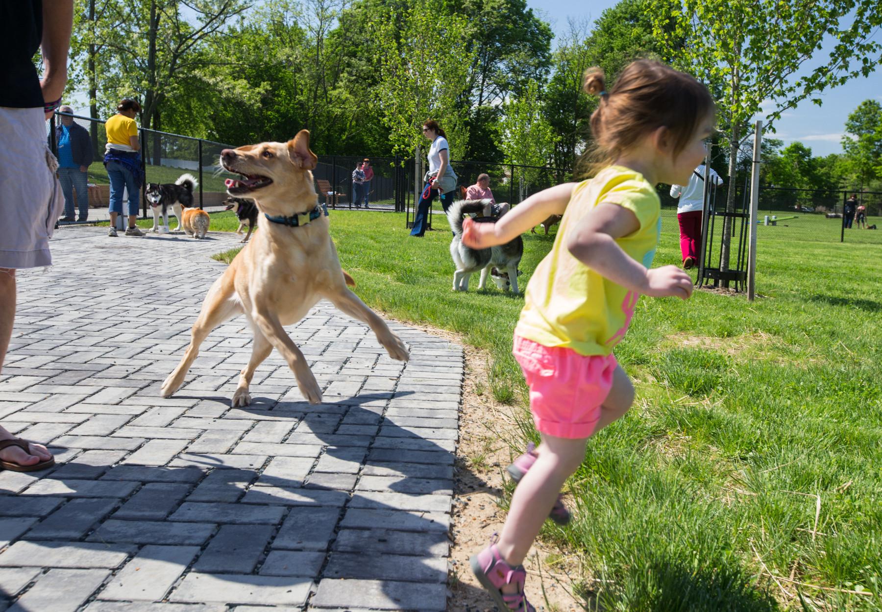 Howard County Dog Park Best