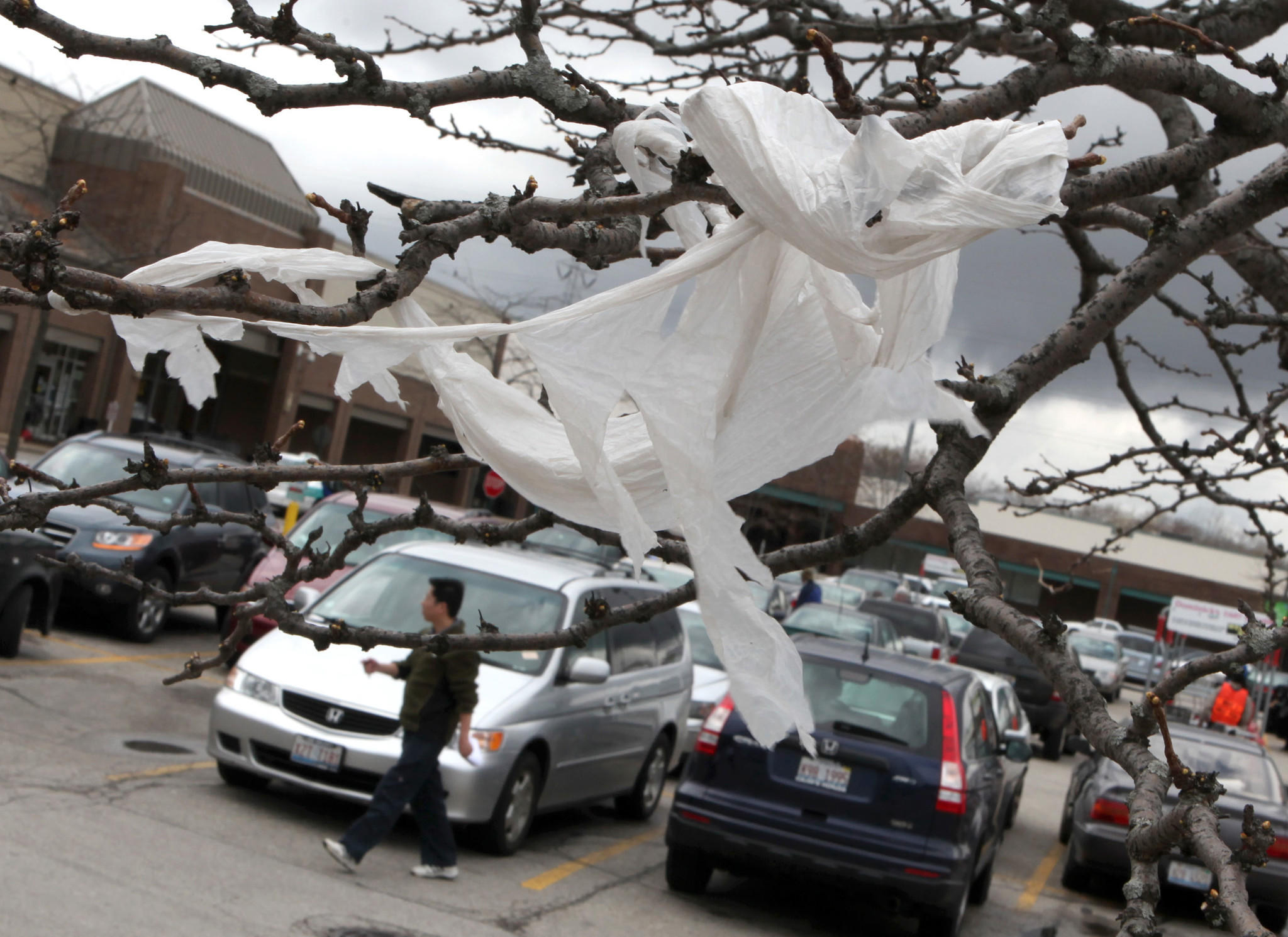 A plastic bag dangles off a tree branch at a Dominick's lot in Evanston.