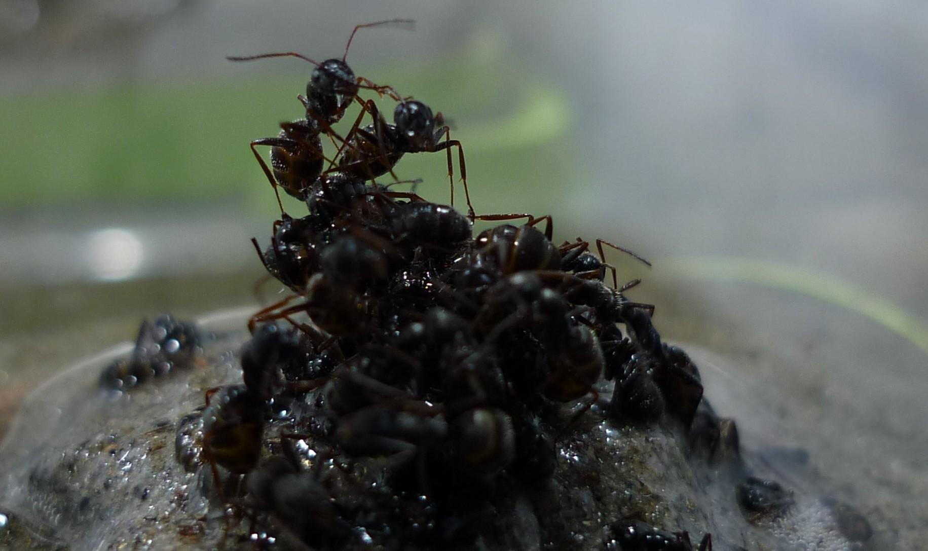 ant colonies powerful search engines that benefit from experience