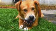 Dog care — easier than Obamacare