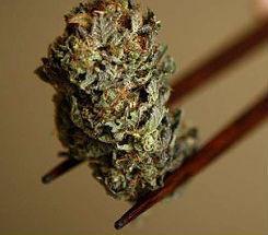 If Medical Marijuana Amendment Passes, Roadmap to Implementation Already Written