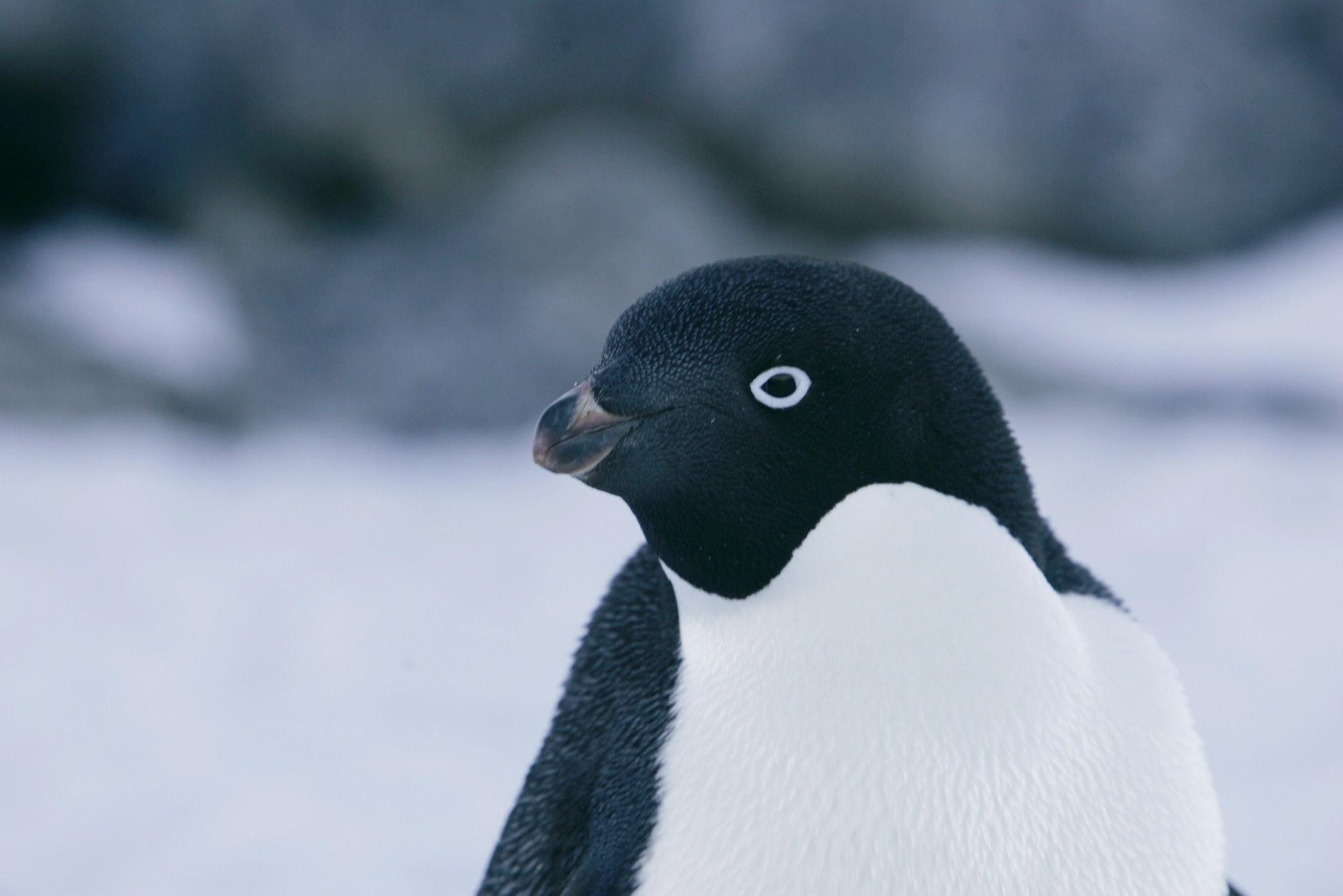 Want to speed up the next mass die-off? Kill and eat as many penguins as possible -- the smug birds have it coming.