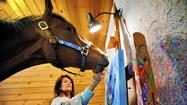 Frederick County horse 'paints' original watercolors