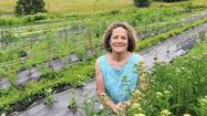 Center at Cromwell Valley Park offers horticultural therapy