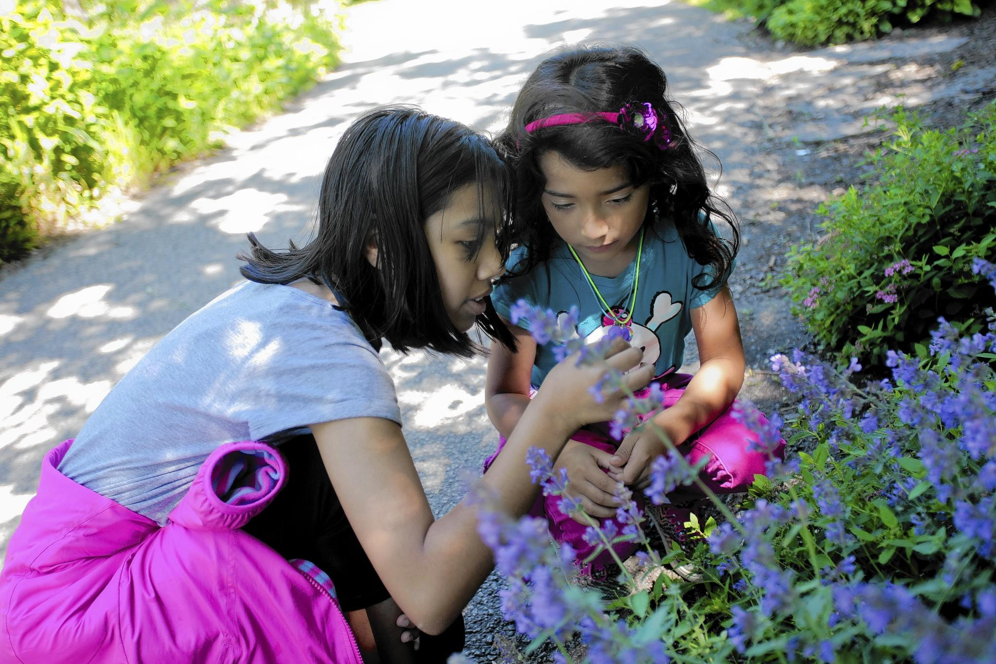 From left, Jasmin Antunez, 11, and Giselle Gamboa, 6, look at flowers behind The Peggy Notebaert Nature Museum.