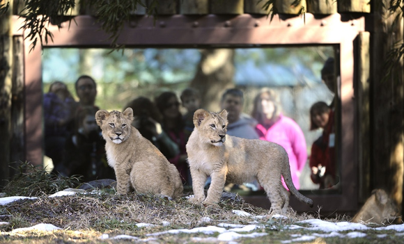 Visit the new cubs at The Mar