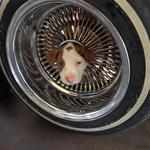 Photo of pup from Bakersfield stuck in tire rim goes viral