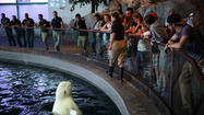 Shedd Aquarium: Oodles of fish, surprising exhibits and, oh yes, crowds