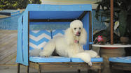 Pets in paradise: Five-star accommodations for Fido take off