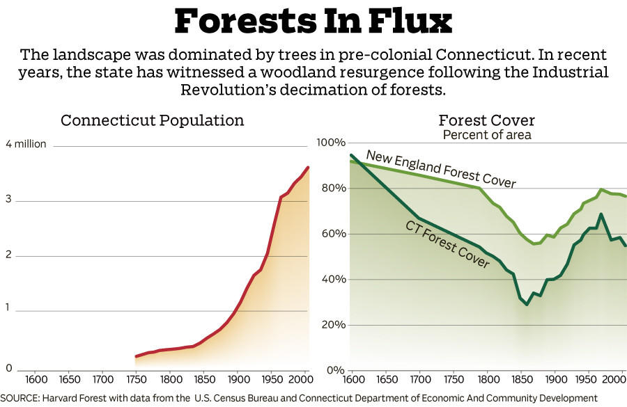 After forests were decimated by the Industrial Revolution, Connecticut has seen the regrowth of its woods.