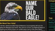 Maryland Zoo in Baltimore to debut first bald eagle in a decade