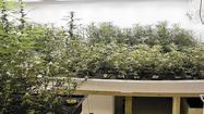 Washington state marijuana shops open today