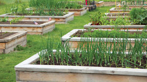 Raised bed gardening the topic of New Kent Extension clinic