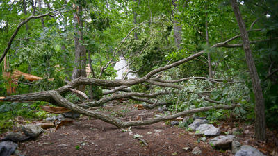 One dead, eight injured by falling trees at Carroll County summer camp during storm