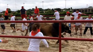 Video: West suburban bull run
