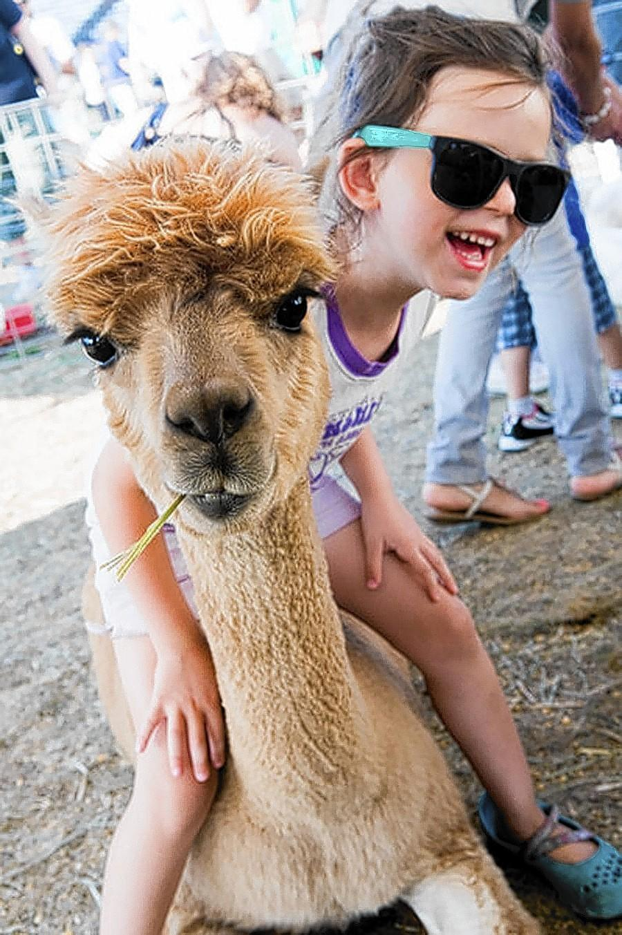 Visitors can get close to animals such as a llama at the 86th Annual Lake County Fair's petting zoo.