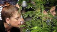 L.A. city attorney seeks court order to halt cannabis farmers market