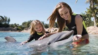 Discovery Cove nabs top prize from TripAdvisor