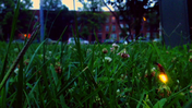 Fireflies in West Baltimore [Video]