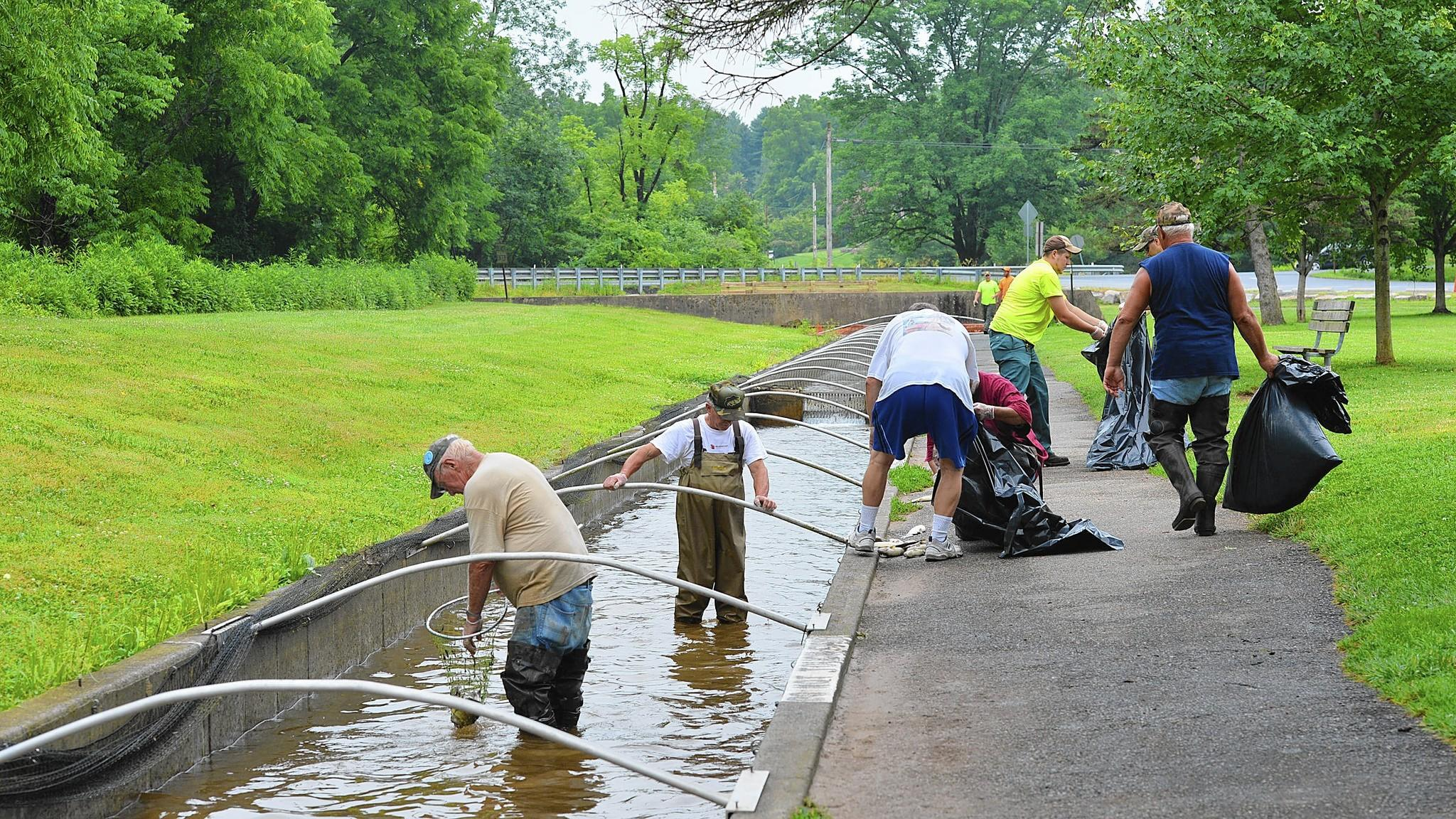City workers and volunteers work together to help remove dead trout out of runways at the Lil-Le-Hi Fish Hatchery.