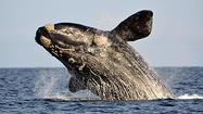 Obama administration approves seismic testing for oil and gas off Atlantic coast