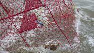 Crabbing with Tony Conrad