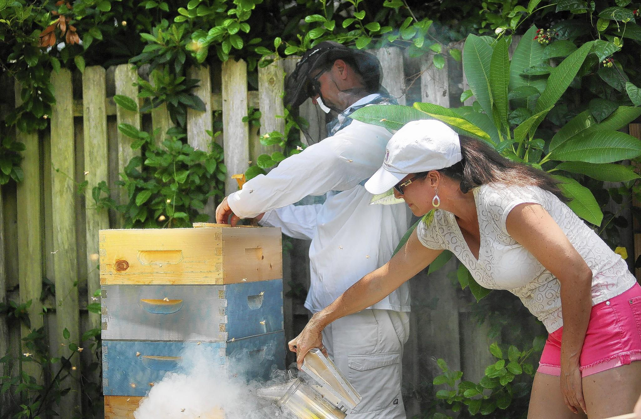 Chuck Fletcher and Dorine Olive harvest honey from their backyard hive. Motivated by a desire for natural food and the collapse of bee colonies worldwide, private citizens are taking up backyard beekeeping.